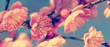 vintage-flower-wallpaper-10