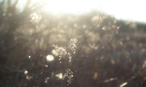 woodland-light-7047